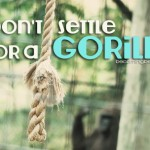 Don't Settle for a Gorilla